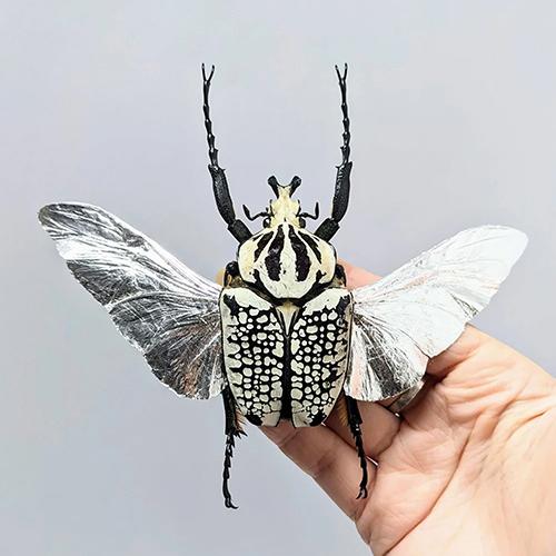 siteGoliaph ins bug